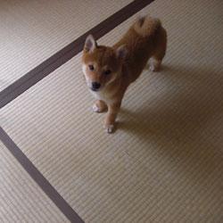 0803-tatami-1.jpg