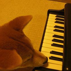 080425-piano.jpg