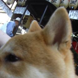 080613-hozenji.jpg