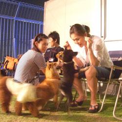 20080913-dogrun-1.jpg