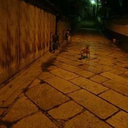 20081015-tsuki.jpg
