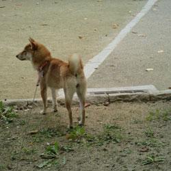 20081102-kozu-1.jpg