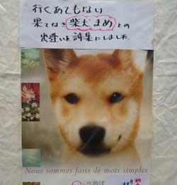 20081108-kusumi-1.jpg