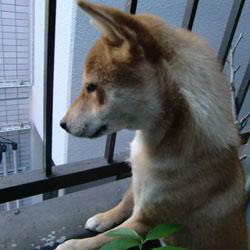 20081207-daiku.jpg