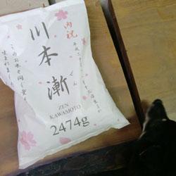 20090125-zen.jpg
