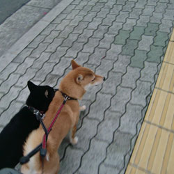 20090130-futari.jpg