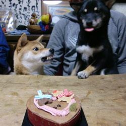 20090209-cake-2.jpg