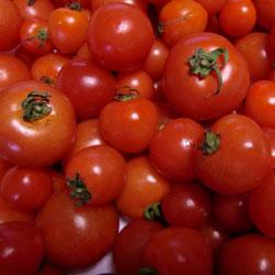 20090305-tomato.jpg