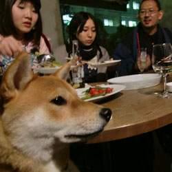 20090331-kana-5.jpg