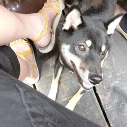 20090416-sandal.jpg