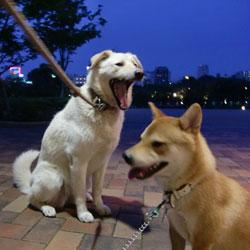 20090624-dog-4.jpg