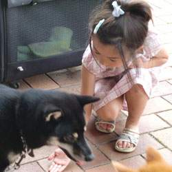 20090624-dog-5.jpg