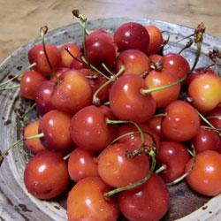 20090630-cherry-3.jpg