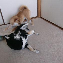 20090812-mamemitsu.jpg