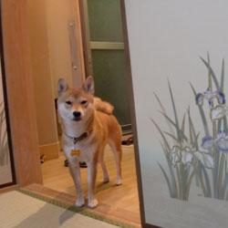 20100214-FUZUMA.jpg