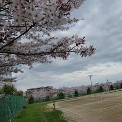 20100410-sei-1.jpg