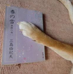 20100527-haru.jpg