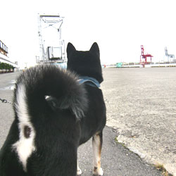 20100614-kaiyu.jpg