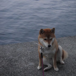 20110112-fuan.jpg