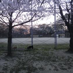 20110403-saku-1.jpg