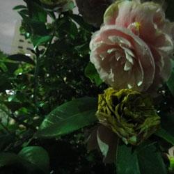 20110423-kozu-2.jpg