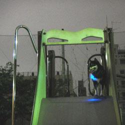 20110510-mitsu-1.jpg