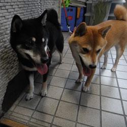 20110628-soji.jpg