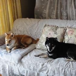 20110817-sofa.jpg