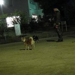 20111117-kozu.jpg