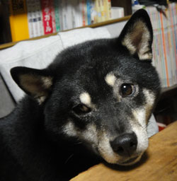 20111208-mitsu.jpg