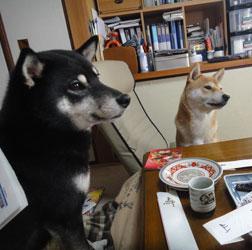 20120101-osechi-3.jpg