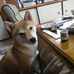 20120101-osechi-7.jpg