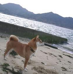 20120104-seashore.jpg