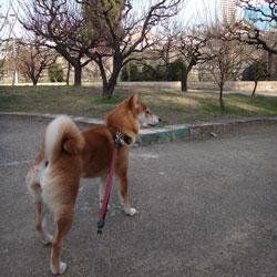 20120303-kozu-1.jpg