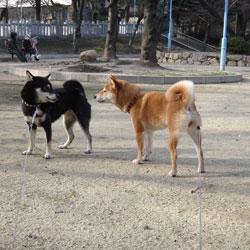 20120303-kozu-3.jpg
