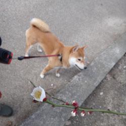 20120303-kozu-4.jpg
