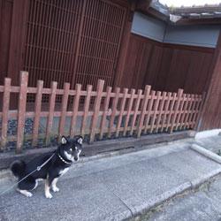 20120406-ashi-3.jpg