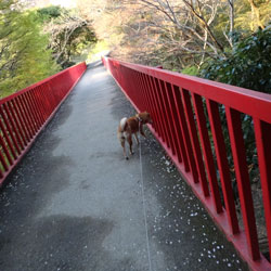 20120416-bridge.jpg