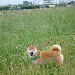 20120520-grass-3.jpg