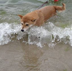 20120811-swim-2.jpg