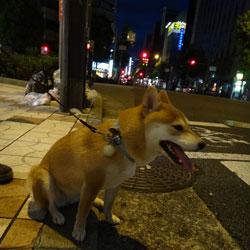 20120819-shingo.jpg