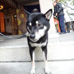 20130102-kozu-2.jpg