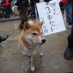 20130114-kozu-4.jpg