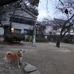 20130120-hiko-4.jpg