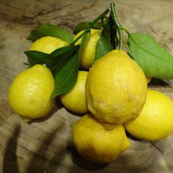 20130311-lemon-2.jpg